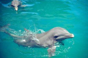 plavání s delfíny v Puerto Plata