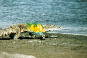 Jezero Enriquillo a krokodýl americký