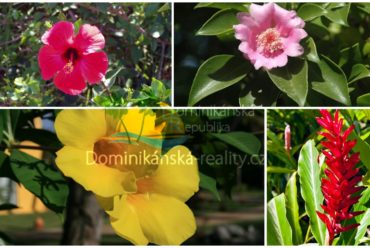 typické květiny v Dominikánské republice