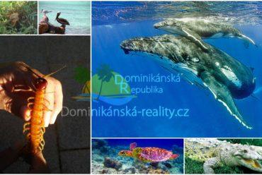 fauna Dominikánské republiky